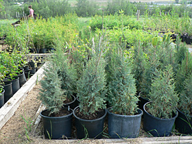 native-plant-nursery